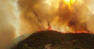 Rif: 500 Hektar Wald und 20.000 Olivenbäume wurden vollständig verbrannt.