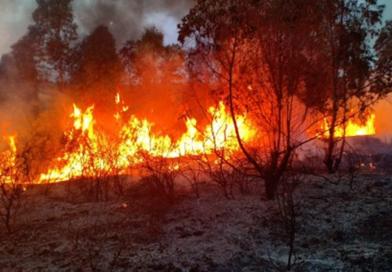 """Menschenrechtsorganisation: Tafersit-Feuer hat mehr als tausend Hektar wald vernichtet! Dieses """"Umweltverbrechen"""" muss untersucht werden."""